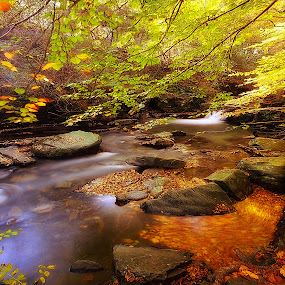 Autumn in the Glen by CLINT HUDSON - Landscapes Forests ( fall colors, autumn leaves, autumn, autumn colors, river thames )