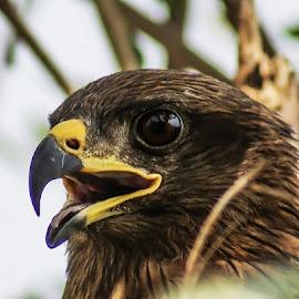 by Mohsin Raza - Animals Birds
