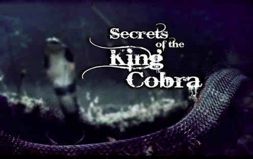 Tajemnice Królewskiej Kobry / Secrets of the King Cobra (2008) PL.DVBRip.XviD / Lektor PL