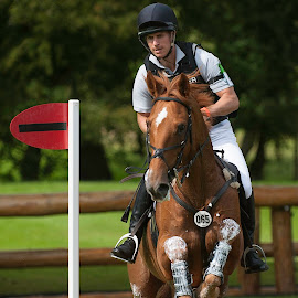 Clear jump by Tim Hill - Animals Horses ( three day eventing, horse trials, cross country, burghley, jump )