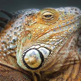 by Dennis Bartsch - Animals Reptiles