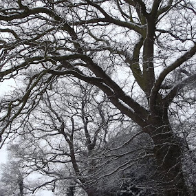 by Hayley Springall - Nature Up Close Trees & Bushes