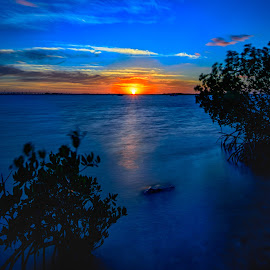 Sunset by Bill Frische - Landscapes Sunsets & Sunrises ( water, tree, rise, sunset, set, ocean, rock, sunrise, mangrove, sun )
