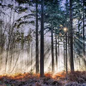 morning light in the forest by Egon Zitter - Landscapes Forests ( cold, forest, sunrise, morning, woods, light )