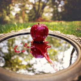 Mirror, Mirror by Jeannie Meyer - Artistic Objects Still Life ( canon, mirror, reflection, mirror mirror, apple, blood, snow white )