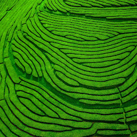 Azores Tea Plantation - Aerial by Jesse Steele - Landscapes Mountains & Hills ( hill, green, portugal, terrace, aerial, landscape,  )