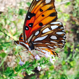 Butterfly  by Tamara King - Instagram & Mobile iPhone