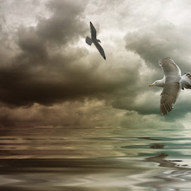 Birds by Nathalie Rouquette - Digital Art Animals ( water, pastel, reflextion, sky, birds )