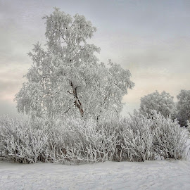 Frosty Trees Icy Fog by Patricia Phillips - Nature Up Close Trees & Bushes ( frost winter fog trees alaska anchorage )