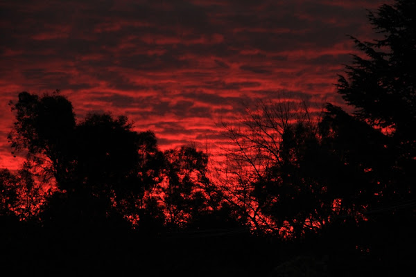 crimson sky over Canberra