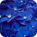 Hydrangea Wallpapers APK for Ubuntu