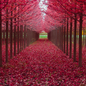 by Samer Shaur - Nature Up Close Trees & Bushes ( fall leaves on ground, fall leaves )