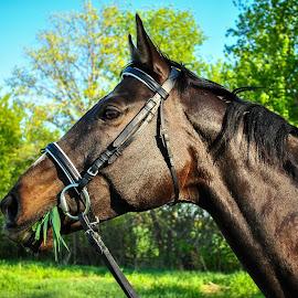 by Chloe Flake - Animals Horses