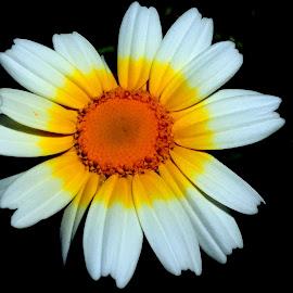 Flower  by Isa Pat - Instagram & Mobile iPhone