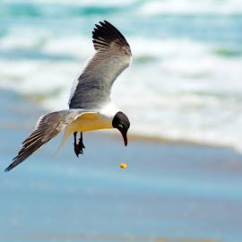D'OH! My Cheetos!  by Ronda Alex-Szankin - Uncategorized All Uncategorized ( flight, bird, animal, texas )