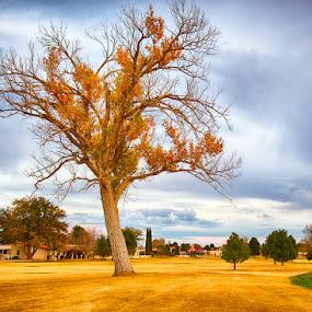 Golden Tree by Dee Zunker - Landscapes Prairies, Meadows & Fields