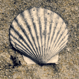 Shell by Kim Sandefur - Nature Up Close Sand