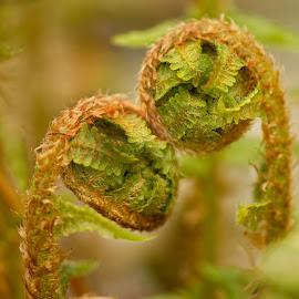 Lover ferns by Michaela Firešová - Nature Up Close Other plants ( fern, detail, green )