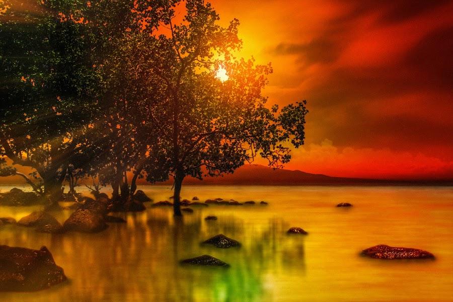 Riverside Beach by Gilbert Sanchez - Landscapes Beaches ( sunrises, silhouette, beach, tree trunk, sun rays, beaches, seas, tree, sunsets, sunrays, sunshine, sun set, sun rise, seascapes, rivers, sunlight, waterscapes, sunburst, landmark, trees, scene, sun light, tress, waterscape, land, seaside, landscape, sun, photography, riverside, scenes, sunny, long exposure, water, seashore, scenics, landscaping, sea, seascape, scenic, landmarks, sunset, sundown, landscape photography, scenic view, sunrise, scenery, landscapes, sunlit, longexposure, slow shutter, river,  )