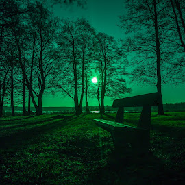 All Green  by Daniel Sandberg - City,  Street & Park  City Parks ( bench, park, green, trees, sun,  )
