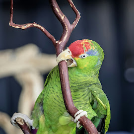 by Jackie Eatinger - Animals Birds (  )