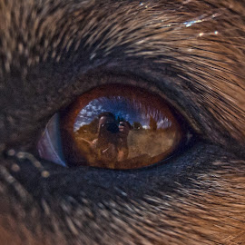 Reflected in his eyes by Sara Verdini - Animals - Dogs Portraits