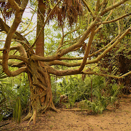 Treebeard by Edward Allen - Nature Up Close Trees & Bushes