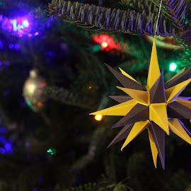 Moravian Star ornament by Chris Snyder - Public Holidays Christmas ( moravian star, ornament, star, christmas, christmas tree, christmas ornament )