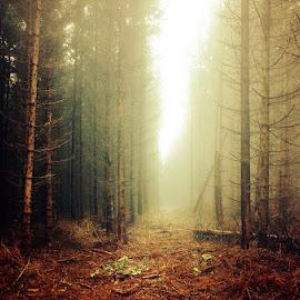 20141026-DSC_3820 by Zsolt Zsigmond - Landscapes Forests ( fog, trees, forest, light, woods, mist )