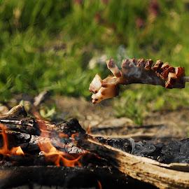 bacon by Zoran Zizak - Food & Drink Cooking & Baking