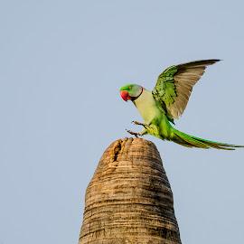 Perfect Landing by Sanjeev Goyal - Animals Birds ( get, set, run, and, go )