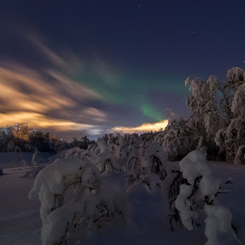 Snow scapes by Gunnar Pedersen - Landscapes Forests ( clouds, aurora, snow, city lights, night, heavy, winther )