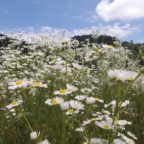 Цветя by Georgi Kolev - Flowers Flowers in the Wild ( облаци., небе., цветя., хълмове., поляна. )