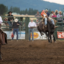 rodeo bronc rider by Craig Lybbert - Sports & Fitness Rodeo/Bull Riding ( ride, cowboy, buck, horse, rodeo, bronc )