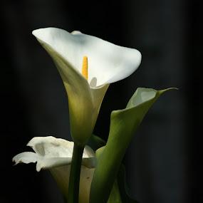 by Kathleen Whalen - Flowers Flower Buds