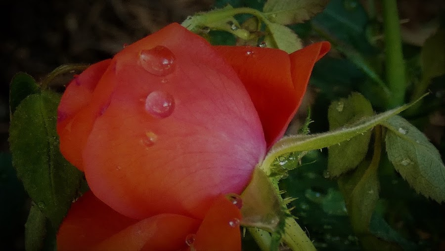 by Denise O'Hern - Nature Up Close Natural Waterdrops