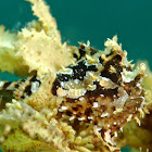 Sargassum Frogfish