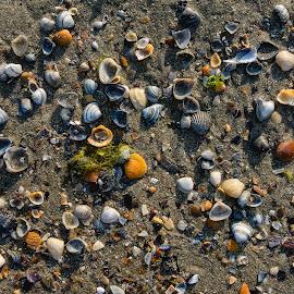 Beach colors by Matei Edu - Nature Up Close Sand ( puzzle, sand, shells, europe, colors, beautiful, sea, romania, beach, pieces, blacksea, color, autumn, moody, painting )
