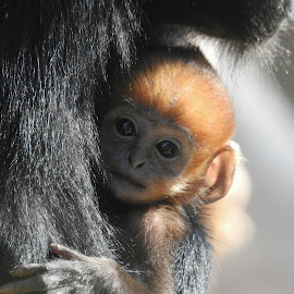 Another new zoo baby by Cathy Hood - Animals Other Mammals