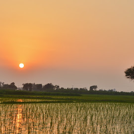 Sunset in Fields by Arsalan Sandhila - Landscapes Sunsets & Sunrises (  )