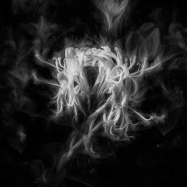 Smoky Flower by Plamen Mirchev - Digital Art Abstract ( white flower, abstract art, white, smoke, dark, abstract, misty, flower,  )