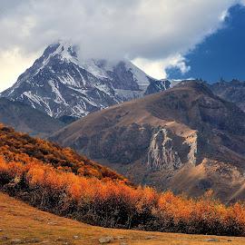 Mountain Kazbek by Tomasz Budziak - Landscapes Mountains & Hills ( mountains, georgia, forest, landscapes )