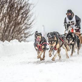 by Benoit Beauchamp - Sports & Fitness Snow Sports