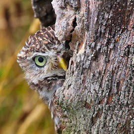 Peek-a-Boo by Wilson Beckett - Animals Birds