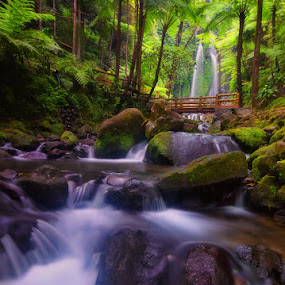 The Forest Road by Hendri Suhandi - Landscapes Forests ( jungle, tropical, waterfall, forest, garden, river )