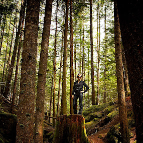 Vancouver Island Forest by Dustin Wawryk - Nature Up Close Trees & Bushes