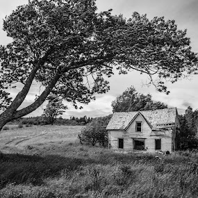 Lonesome by Rita Taylor - Black & White Landscapes ( farm, old, tree, house,  )