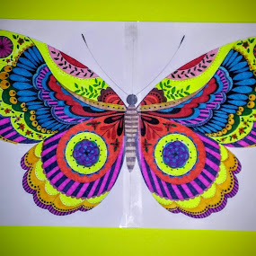 Colorful butterfly by Linda Tribuli - Drawing All Drawing (  )