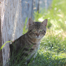Safe Spot by Liz Huddleston - Animals - Cats Portraits ( grass, hiding, green eyes, peek, sunlight, tabby )