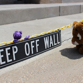 Keep Off the Wall by Amanda Lemieux - Novices Only Objects & Still Life ( stuffed animals, toys, fun, vignette, playtime,  )
